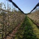 Otvoreno 5 natječaja za ulaganja u poljoprivredna gospodarstva !