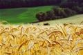 Zakon o obiteljskom poljoprivrednom gospodarstvu u javnoj raspravi