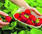 Gospodarsku djelatnost u poljoprivredi moguće je obavljati kroz obrt